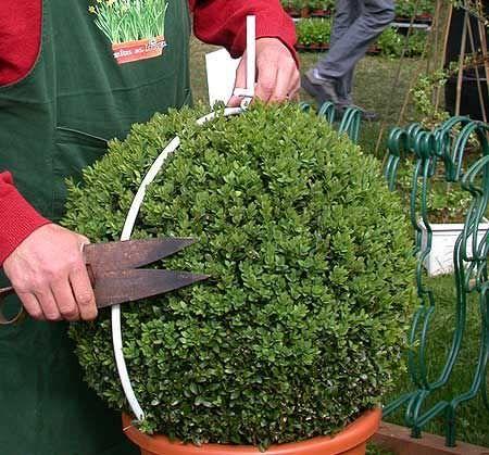 gardening scissors